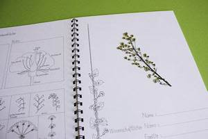 Was Ist Ein Herbarium : herbarium labb ~ A.2002-acura-tl-radio.info Haus und Dekorationen