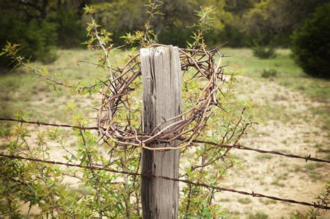 Crown Of Thorns On A Texas Hill Country Fence Post Stock
