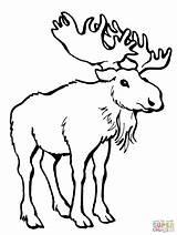 Moose Coloring Deer Pages Alaska Template Printable Antlers Drawing Templates Animal Animals Elk Getdrawings Clipart Library Popular Disimpan Dari Categories sketch template
