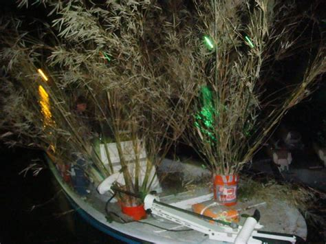 attempt  building bamboo brush piles page