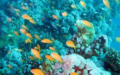 Aquarium Underwater Reef Wallpapers Fish Pixelstalk