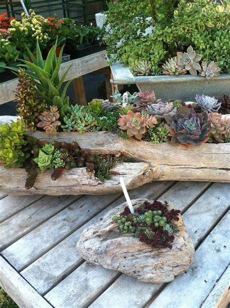 arbre en pot pour balcon d 233 co bois flott 233 et plantes succulentes avec des troncs d arbre pour embellir la terrasse le