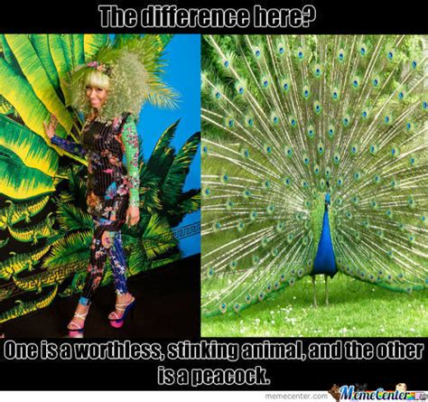 Peacock Meme - peacock memes best collection of funny peacock pictures
