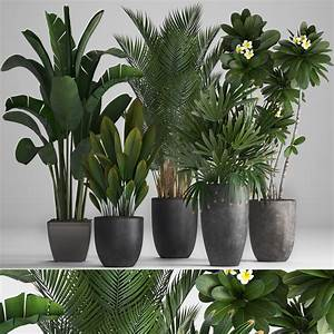 3d, Frangipani, Collection, Of, Ornamental, Plants, In, Pots