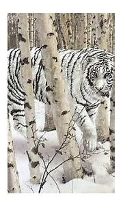 Siberian (Amur) Tiger: White Siberian tiger