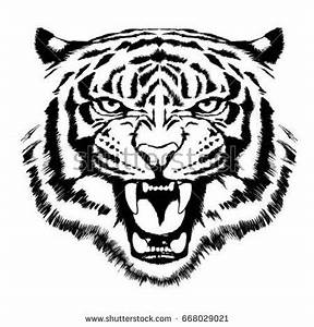 Tiger Face Stock Images, Royalty-Free Images & Vectors ...