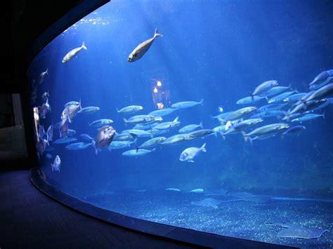 l aquarium de visite et billets