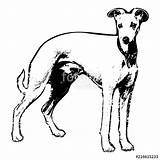 Whippet Drawing Clipartmag sketch template