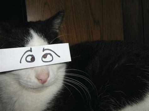 cats  funny anime eyes