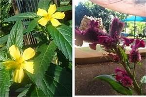 Arbres Fruitiers Nains En Pleine Terre : vis ma vie en australie hotel butterfly farm batchelor ~ Premium-room.com Idées de Décoration
