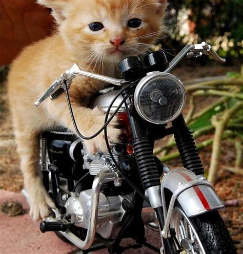 Un atkal - kaķi... - Spoki - bildes 2