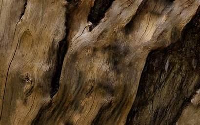 Wood Tree Wallpapers Grain Desktop Bark Background