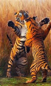 Two Tiger Fightining, HD Animals, 4k Wallpapers, Images ...