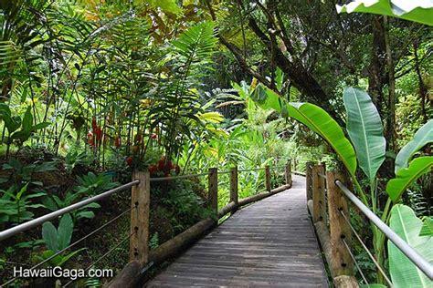 hawaii tropical botanical garden hawaiian tropical botanical garden big island