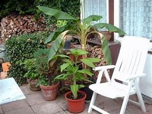 Pflanzen Für Balkon : pflanzen f r den balkon der gartenratgeber ~ Sanjose-hotels-ca.com Haus und Dekorationen