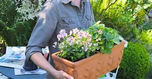 Lang Blühende Pflanzen : pflanzidee blumenkasten mit erdbeeren und elfensporn mein sch ner garten ~ Eleganceandgraceweddings.com Haus und Dekorationen