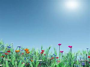 Spring, Meadow Flowers, Poppies, Nature Hd Wallpapers