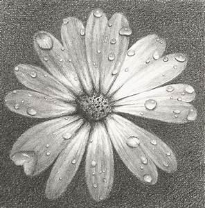 20+ Flower Drawings, Sketches   Design Trends - Premium ...