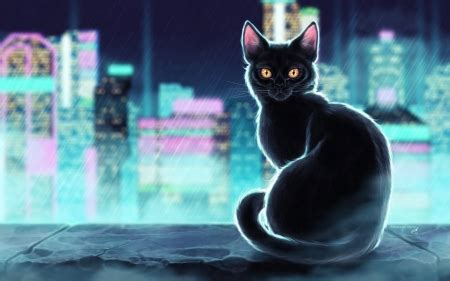 black cat fantasy abstract background wallpapers