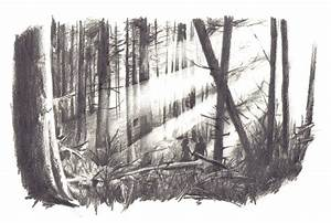 Drawn forest black and white - Pencil and in color drawn ...