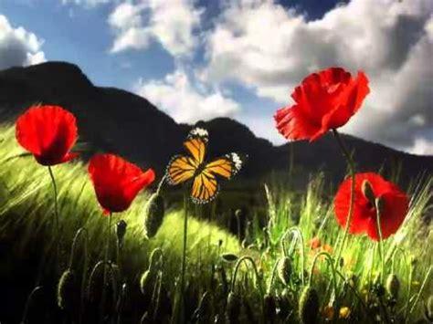 imagen de mariposa animada youtube