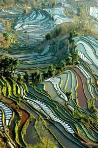 Terraced Rice Paddies China