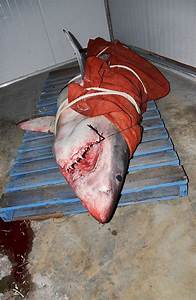 60 Minutes interview on shark attack victim Sean Pollard ...