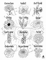 Coloring Flower Larkspur Aster Flowers Tattoos Tattoo Narcissus Daffodil Chrysanthemum Monthly Sold sketch template