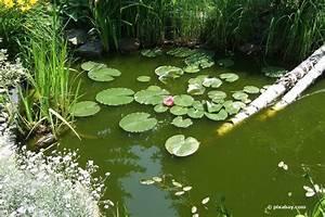 Grünes Wasser Im Gartenteich Hausmittel : gr nes tr bes wasser gartenteich was tun ~ Watch28wear.com Haus und Dekorationen