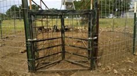 deer feeders for craigslist 1000 images about hog traps on property tax