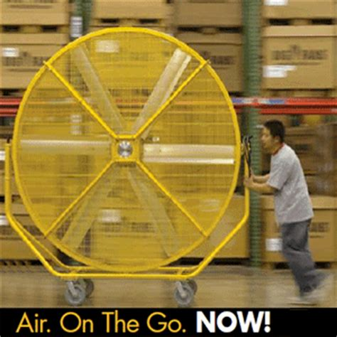 where to buy big fans fans gif find share on giphy