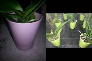 Orchideen Ohne Topf : der durchsichtige topf bei orchideen orchideeng rtnerei alois putzer floricoltura di orchidee ~ Eleganceandgraceweddings.com Haus und Dekorationen