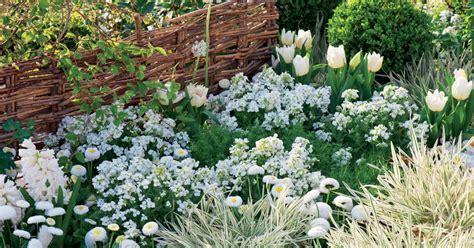 Garten Pflanzen Forum by Pflanzen F 252 R Den Wei 223 En Garten Mein Sch 246 Ner Garten