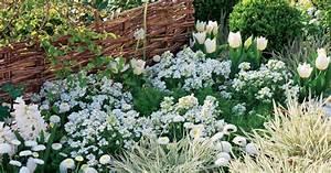 Winterpflanzen Für Den Garten : pflanzen f r den wei en garten mein sch ner garten ~ Whattoseeinmadrid.com Haus und Dekorationen