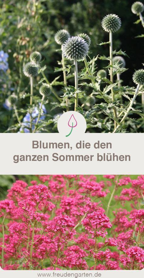Stauden Die Lange Blühen by Blumen Die Lange Bl 252 Hen