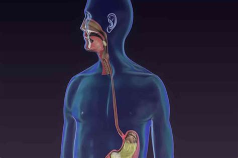 Acid Reflux And Ear Infections In Adults Broad Obnoxiousga