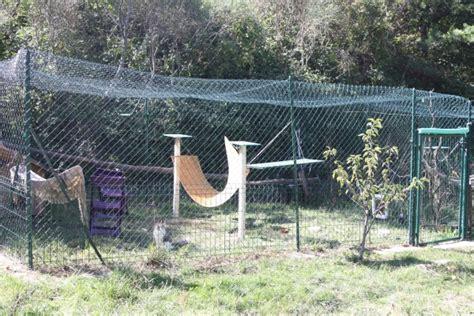 construire un enclos exterieur pour chat chatterie de l eperon elevage de chat norvegien en dr 244 me proche de montelimar