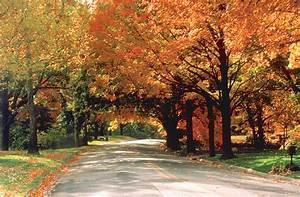 Fall Foliage Stock Images - Naper Design | Naperville Web ...  Fall