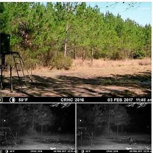Winter 2017 New Bigfoot Sightings & Bigfoot Encounters