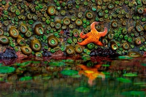 tide tables yachats oregon 25 best just beachy images on pinterest color palettes