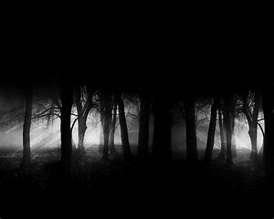 (3002) Dark Forest Moon Widescreen HD Wallpaper - WalOps.com