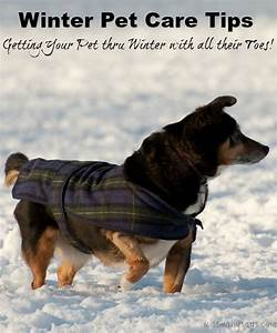 winter pet care tips getting your pet thru winter with With winter dog care