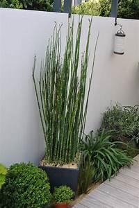 Plante En Jardiniere Exterieur Pivoine Etc