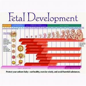 Fetal Development Chart Pdf