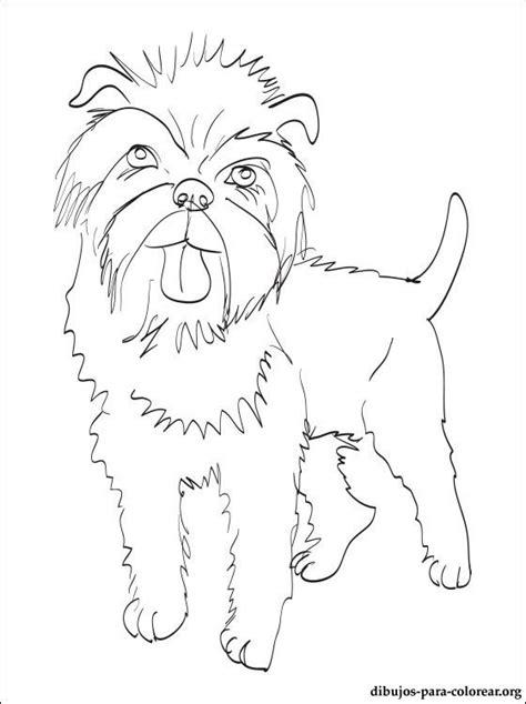 dibujo de affenpinscher  colorear dibujos  colorear
