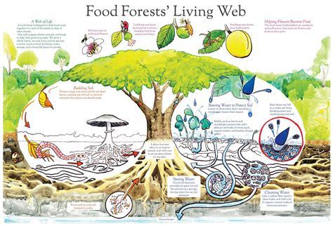 establishing  food forest  chickens realfarmacycom