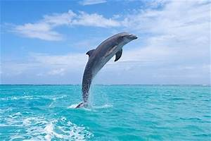 Dolphins Jumping Out Of The Water - wallpaper.
