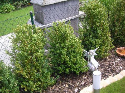 Buchsbaum Raupe Giftig by Raupe An Buxus Buchsbaum Chance Auf Rettung Fragen