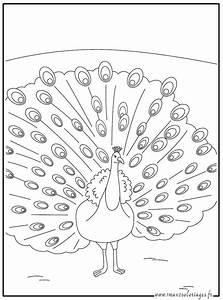 Dessin De Plume Facile : coloriage dessiner paon ~ Melissatoandfro.com Idées de Décoration