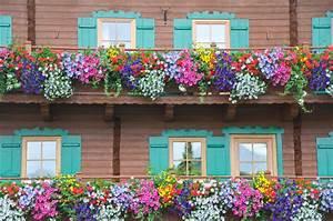 Blumen Für Den Balkon : blumen balkon pin blumen f r den balkon on pinterest pin ~ Lizthompson.info Haus und Dekorationen